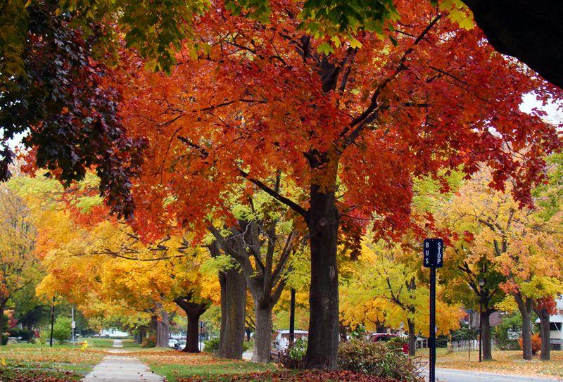 Fall 8