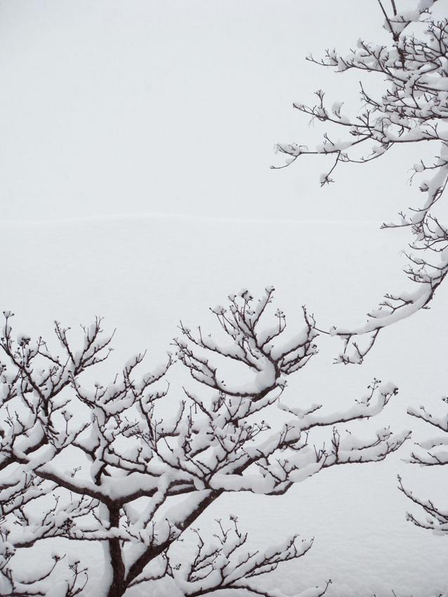 Snowday 24