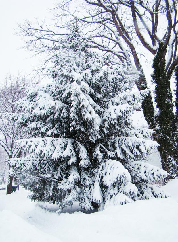 Snowday 22