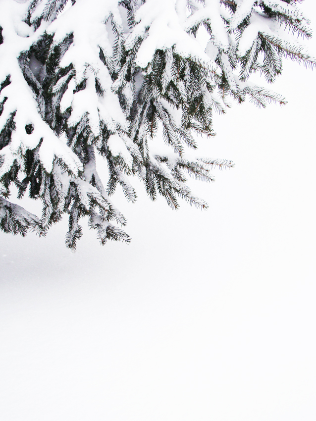 Snowday 4