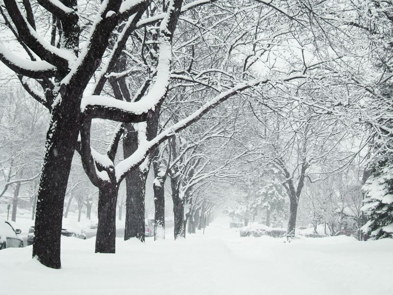 Snowday 23