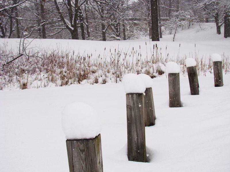 Snowday 29