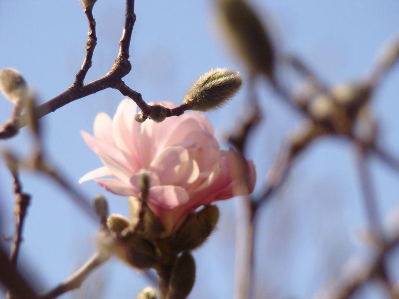 Spring 15